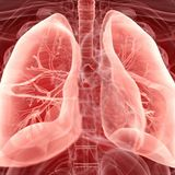 Damaged human lungs revived for transplant by connecting them to a pig