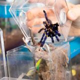 Tarantulas and a bunch of other big, hairy spiders seized from Norway motel