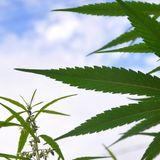 Lindsey Graham Challenger Jaime Harrison Backs Legalizing Marijuana