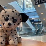 Airport Launches Campaign To Reunite A Stuffed Puppy With His 6-Year Old Owner