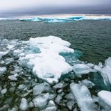 Chlamydia cousin discovered in deep Arctic Ocean
