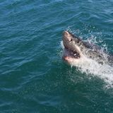 Former Fashion Executive Killed in a Shark Attack in Maine | Science Times