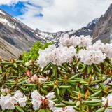 Many beloved garden flowers originated in this mountain hot spot—the oldest of its kind on Earth