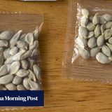China offers to help investigate mystery seeds sent to US