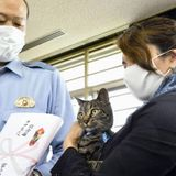 Clever cat wins police plaudits in Japan for leading to rescue of man stuck in canal | The Japan Times