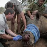 South Africa cuts rhino poaching by half: minister - France 24