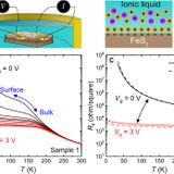 Voltage-induced ferromagnetism in a diamagnet