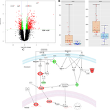 Transcriptomic profile of adverse neurodevelopmental outcomes after neonatal encephalopathy