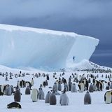 New penguin colonies in Antarctica spotted by satellites in space | Living