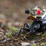 This tiny camera can show the world from a bug's point of view