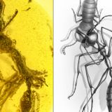 Fossil captures ancient 'hell ant' in action