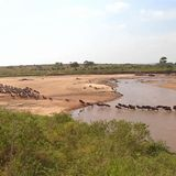 Few show up to watch migration of Kenyan wildebeests amid pandemic