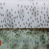 Parasite 'resistant to malaria drug' in Africa