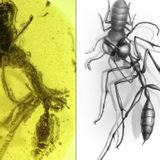 Researchers find ancient 'Hell Ant' frozen in time, locked in battle