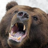 The Dow Closed in Bear Market After WHO Declares Pandemic