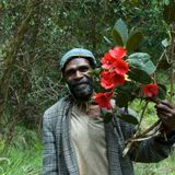 New Guinea has the most plant species of any island