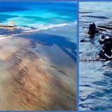 Mauritius oil spill: Volunteers use hair and stockings to limit damage | Living