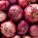 Onions sold at CA Trader Joe's, Ralphs recalled after salmonella outbreak sickens 640 people