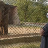 Elephant kept in chains in Pakistan is released after 35 years | Living