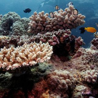 Australia's Great Barrier Reef suffers third bleaching event in 5 years