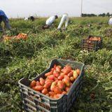 Coronavirus lockdown leaves Italian farmers struggling for spring