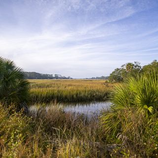 How Georgia Protected Its Salt Marsh 50 Years Ago, And Why That's Important For The Future | 90.1 FM WABE