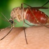 First 2 Deaths of 2020 Due To West Nile Virus Reported in Dallas County