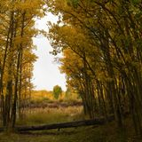 Abnormally early below-freezing temperatures could ruin Colorado leaf-peeping this year