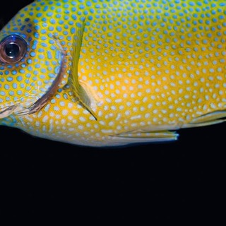 In Controversial Study, Tiny Fish Appears as Self-Aware as Chimps, Dolphins