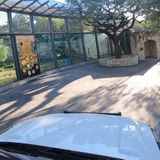 Trick-or-Treat from your car at Drive-Thru Zoo Boo at San Antonio Zoo