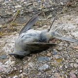 Thousands of Birds Mysteriously Drop Dead in New Mexico | Science Times