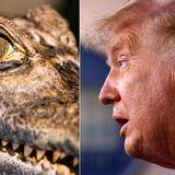 Helium-huffing alligator scientists, Donald Trump win Ig Nobel Prizes