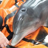 WATCH: Audubon helps rescue dolphin stranded by Hurricane Laura