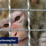 Hopes for coronavirus vaccine rise after infected monkeys become immune