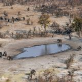 Toxic Algae Caused Mysterious Widespread Deaths of 330 Elephants in Botswana