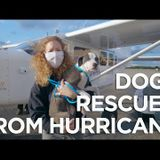 Hurricane Laura Rescue! No Dog Left Behind Flies to the Gulf Coast to Save Homeless Pets