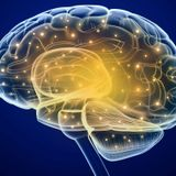 Neuroscience research shows we reorganize our memory based on how we will use it later