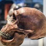 Neanderthal genetics study reveals missing link in human history