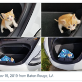 Tesla Owners Are Helping Cats At Kettleman City Supercharger