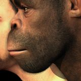 """2 million-year-old ancient human skull fossils rewrite the """"story of us"""""""