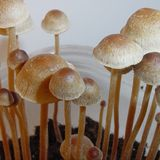 New TV Ads Urges Oregon Voters To Legalize Psilocybin Therapy