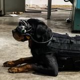 The army is testing AR goggles for dogs | ZDNet