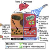 Exposure to Static Magnetic and Electric Fields Treats Type 2 Diabetes