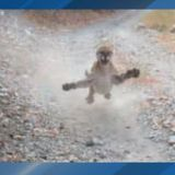 Cougar stalks, charges hiker in Slate Canyon in Utah County