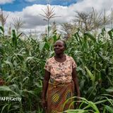 Ending hunger: science must stop neglecting smallholder farmers