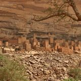 Dogon people: The tribe of star connoisseurs | Need For Science