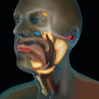 Cancer scientists find the new salivary gland