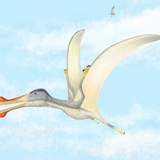 Four New Species of Prehistoric Flying Reptiles Unearthed in Morocco
