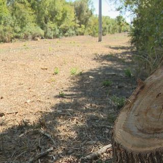 Oncor clear-cuts three acres at White Rock Lake without city approval