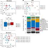 The gut microbiome defines social group membership in honey bee colonies